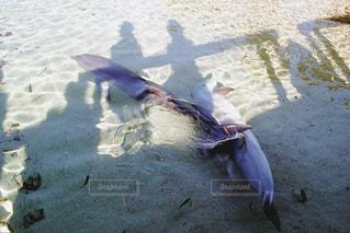 動物,海外,イルカ,癒し,旅行,ハワイ,休日,ハワイ島,海外旅行,ふれあい,リフレッシュ,お出かけ,休暇