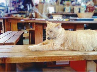 猫,椅子,ねこ,お店,雑貨,愛知県,常滑,やきもの,看板猫,ネコ,常滑焼