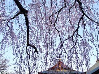 京都 天龍寺の写真・画像素材[1024689]