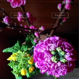 春の花 - No.1049911