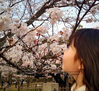 お花見の写真・画像素材[1050986]