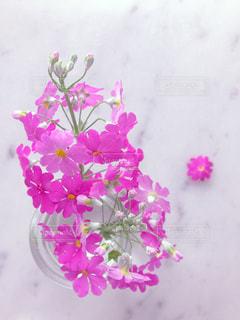 花,春,ピンク,かわいい,花びら,ハート,ガラス瓶,大理石,多数,プリムラ・マラコイデス