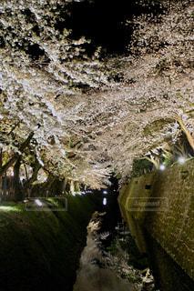 金沢城公園の夜桜の写真・画像素材[1122042]