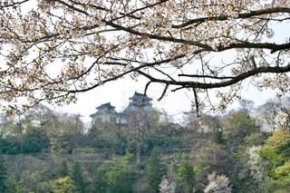 大野城と桜 - No.1127344