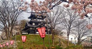 高田城と桜の写真・画像素材[1132743]