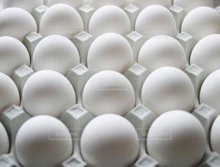 卵の写真・画像素材[1187516]