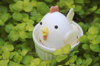 卵のニワトリの写真・画像素材[1197622]