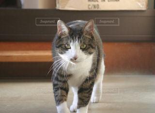 歩いて来る猫の写真・画像素材[1205200]