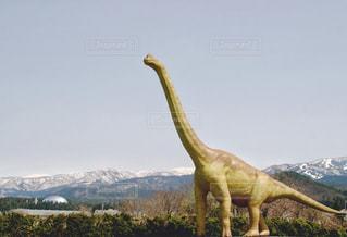 ブラキオサウルスと福井県立恐竜博物館の写真・画像素材[1206954]