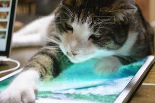 iPadを横取りするネコの写真・画像素材[1278552]