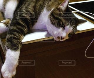 トラ猫とパソコンの写真・画像素材[1285749]