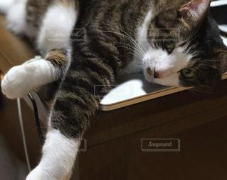 ネコとパソコンの写真・画像素材[1285781]