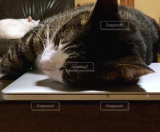 ネコとパソコンの写真・画像素材[1285835]