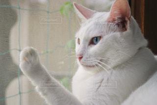外を眺める猫の写真・画像素材[1290224]
