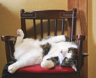 猫,夏,屋内,暑い,椅子,ねこ,壁,ポーズ,カメラ目線,トラ猫,ヘソ天,座席,ネコ,指定席,熱中症対策,暑さ対策,暑さしのぎ
