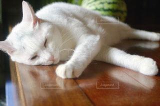 猫,夏,屋内,白,スイカ,暑い,ねこ,床,寝る,白猫,哺乳類,夏バテ,ネコ,邪魔,横たわる