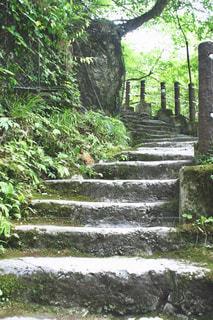 石段の写真・画像素材[1423802]