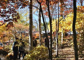 秋,紅葉,屋外,赤,青,景色,樹木,旅行,快晴,黄,秋空,雑木林,お出かけ,八ヶ岳