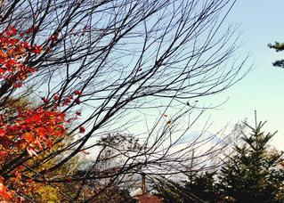秋,富士山,紅葉,屋外,赤,青空,青,景色,樹木,旅行,快晴,秋空,雑木林,お出かけ,八ヶ岳