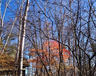 自然,空,秋,青空,秋空,雑木林,八ヶ岳,八ヶ岳倶楽部