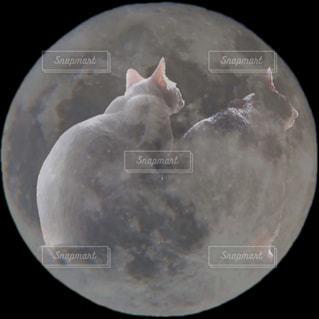 猫の月見の写真・画像素材[1500959]