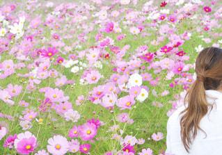 女性,20代,風景,花,秋,レディース,ヘアスタイル,ピンク,植物,コスモス,後ろ姿,景色,富山県,ロング,まとめ髪,散策,パーマ,ゆるふわ,ゆるふわパーマ,砺波市,夢の平スキー場,となみ夢の平スキー場