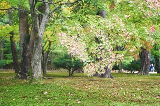 秋,紅葉,屋外,緑,観光地,葉,もみじ,落ち葉,樹木,苔,庭園,石川県,金沢,11月,多色