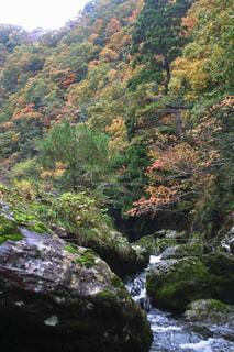 自然,風景,秋,紅葉,屋外,カラフル,川,山,樹木,岩,石川県,11月,多色,小松市,荒俣峡