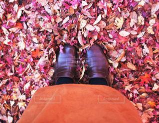 落ち葉の絨毯の写真・画像素材[1618950]