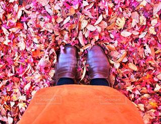 足元は紅葉の絨毯の写真・画像素材[1807510]