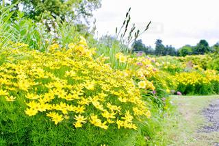 花,屋外,緑,黄色,小道,イエロー,カラー,色,黄,yellow,氷見あいやまガーデン