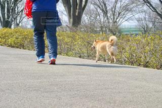 犬,公園,スポーツ,屋外,赤,青,走る,仲良し,樹木,いぬ,人,ジョギング,ランニング,健康,運動,ラン,ライフスタイル,一緒,イヌ,紺
