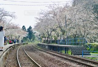 春,桜,ピンク,線路,花見,お花見,能登,複数,能登さくら駅