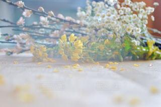 花,春,屋内,かすみ草,ピンク,白,黄色,菜の花,季節,花びら,イエロー,カラー,色,黄,桃の花,yellow,カスミソウ