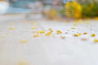 花,春,屋内,緑,黄色,菜の花,季節,花びら,テーブル,イエロー,カラー,色,黄,散る,yellow,複数