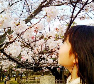 桜を見つめる少女の写真・画像素材[1874536]