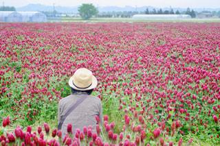 女性,風景,花,屋外,緑,植物,赤,後ろ姿,帽子,景色,鮮やか,人物,背中,人,後姿,しゃがむ,5月,畑,小雨,アースカラー,クリムソンクローバー,ラフィア帽