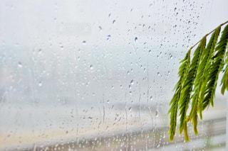 風景,屋内,雨,植物,水,窓,水滴,海岸,景色,ガラス,水玉,雫,窓際,しずく,道の駅,ガラス越し,雨宿り,雨模様,雨晴海岸