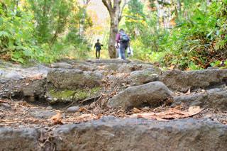 戸隠神社奥社に続く石段の写真・画像素材[2146994]