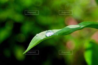 水滴の写真・画像素材[2167034]