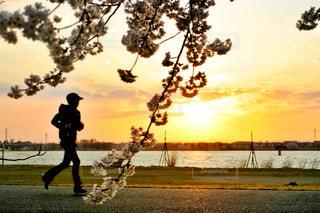 夕陽とランナーの写真・画像素材[2167813]