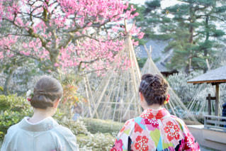 梅の季節の写真・画像素材[3037605]
