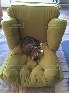 ソファの上で眠っている猫 - No.724177