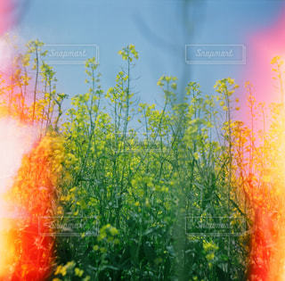 近くに煙のアップの写真・画像素材[1244544]
