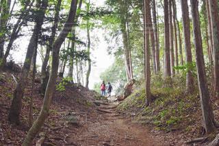 森の中の泥道の木の写真・画像素材[2234055]