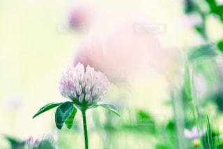 花のクローズアップの写真・画像素材[2279546]