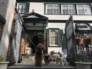 建物の前に立っている犬の写真・画像素材[973744]
