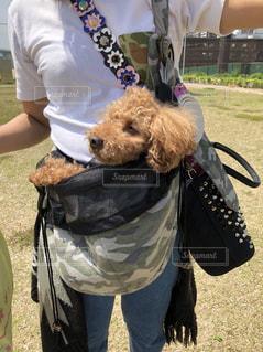 着ぐるみを着た犬の写真・画像素材[1188777]