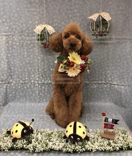犬の隣に座っているテディー ・ ベアのグループの写真・画像素材[1188778]