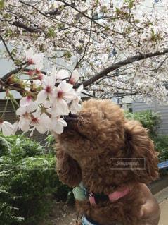 テディー ・ ベアの上に座っている犬の写真・画像素材[1188780]